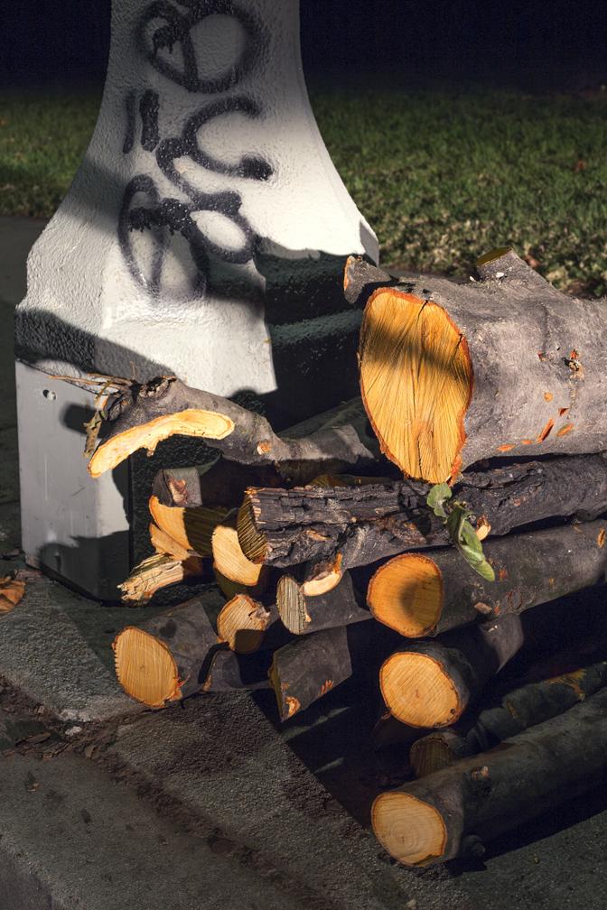 Cut Log 1