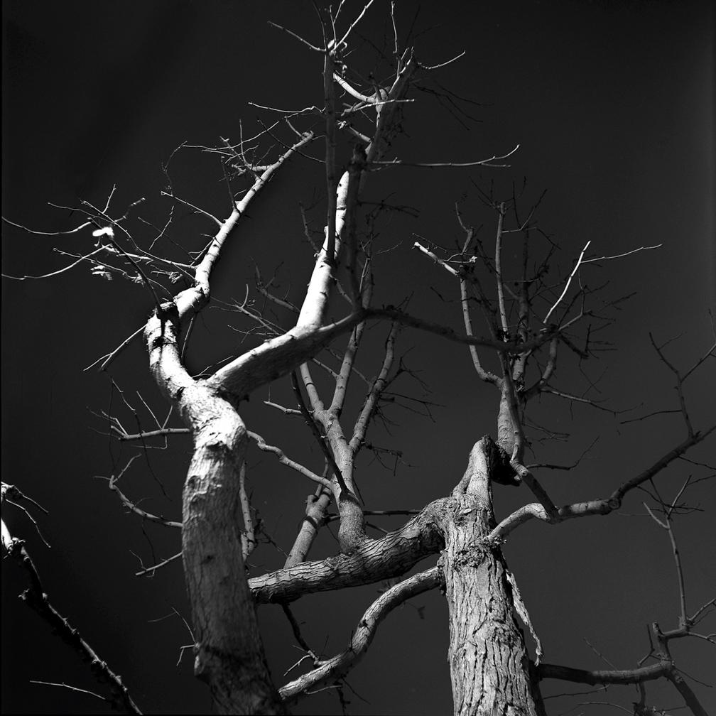Tree Poe